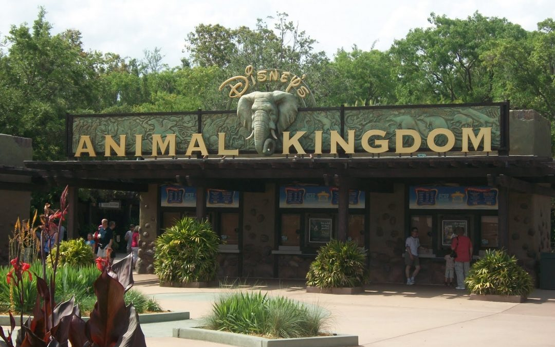 You won't believe what's happening at Disney's Animal Kingdom® Theme Park!